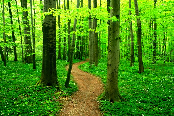 pathways to wellness